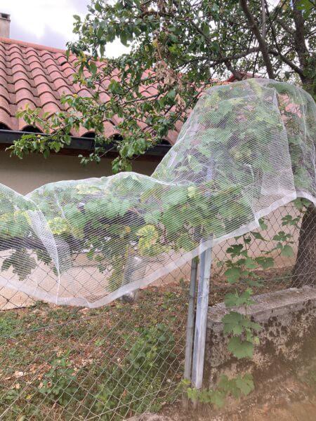 Filet anti-oiseaux pour protéger ses vignes et raisins