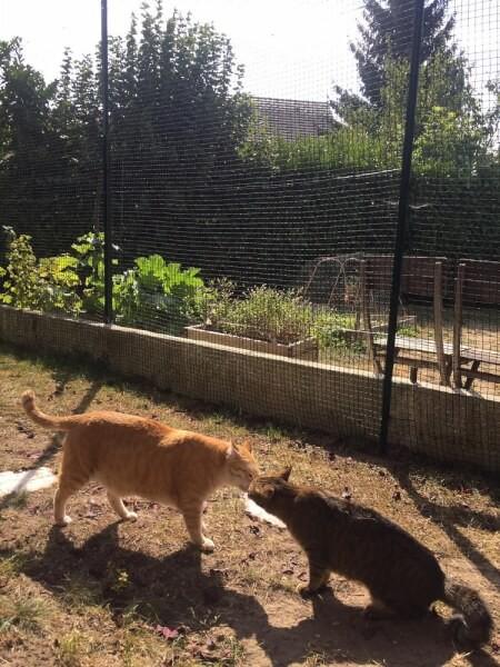 Enclos pour chats avec filets de protection installés dans jardin