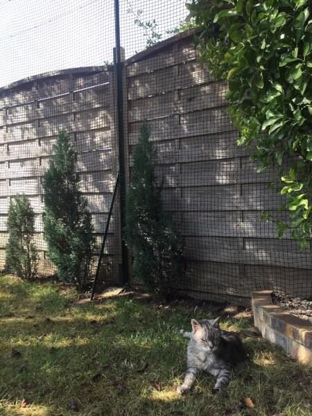 Filet de protection pour chat fonction enclos