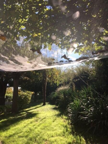 Filet de rétention collecteur de figues et feuilles mortes