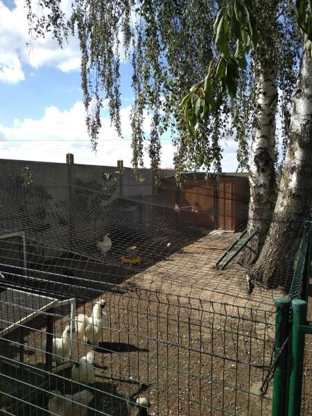 Filet de volière installé sur un parc à poules d'ornement