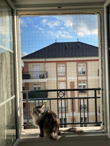 Protection économique pour grand chat