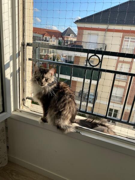 Filet de sécurité sur fenêtre pour chat type Maine Coon