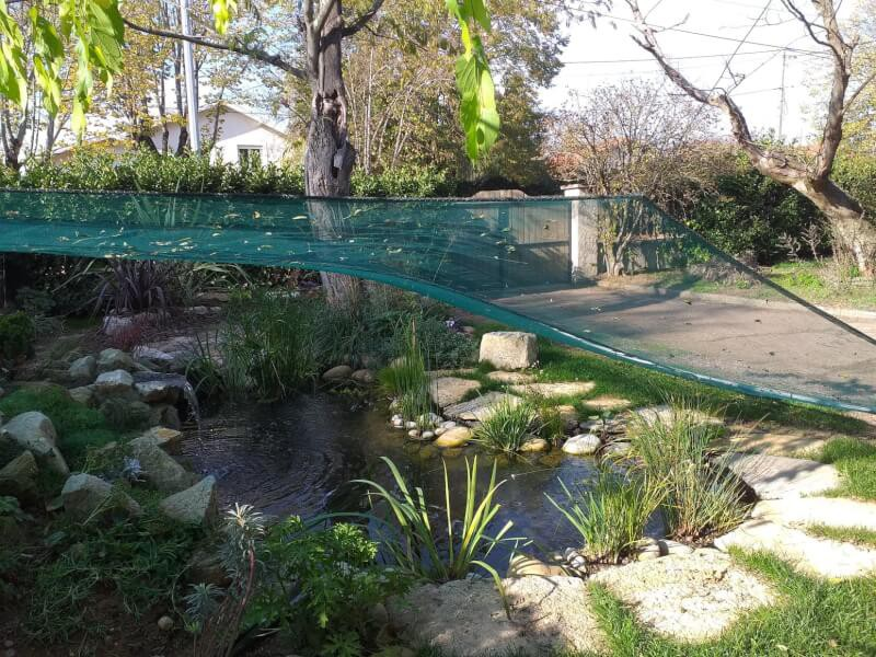 Bassin sous les arbres protégé par un filet anti-feuilles