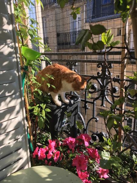 Protéger ses chats sur la balcon avec un filet mailles 50 mm