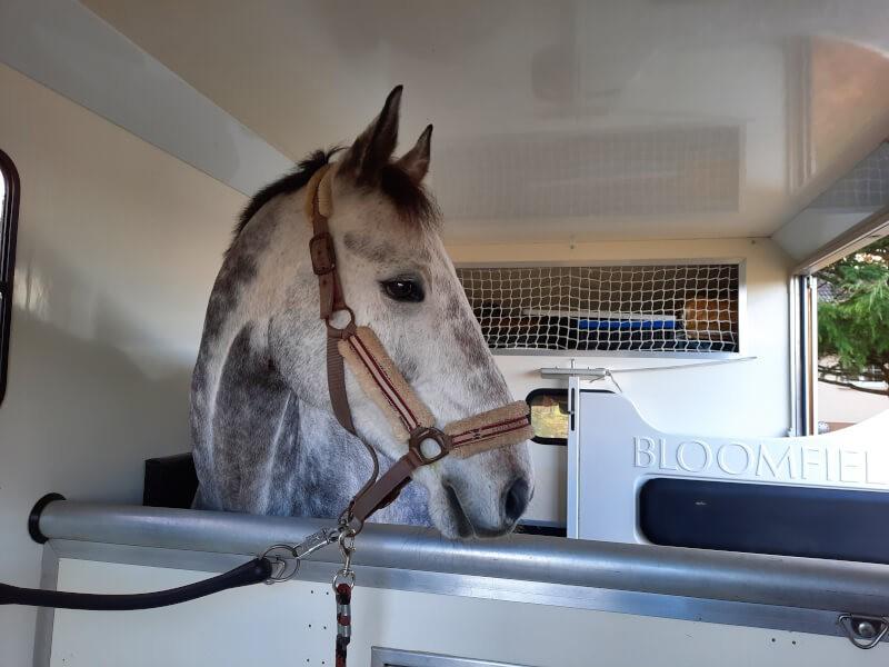 Le filet de sécurité pour niche de stockage de camion de transports pour chevaux