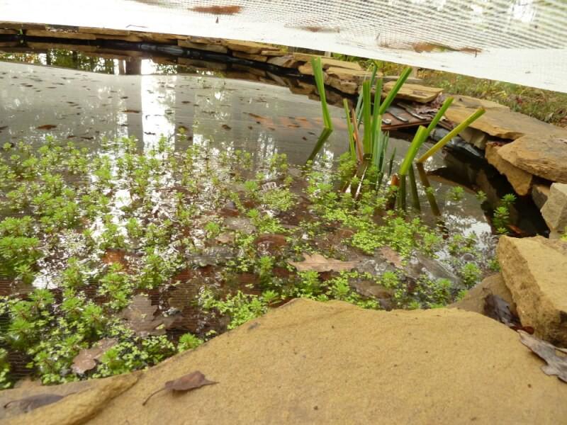 Filet anti-feuilles tendu sur un grand bassin