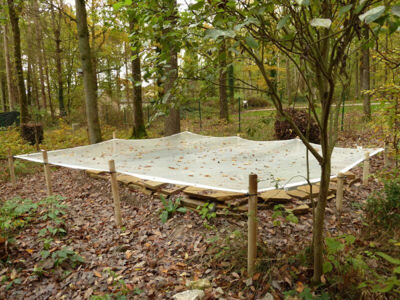Grand bassin en forêt protégé par un filet anti-feuilles