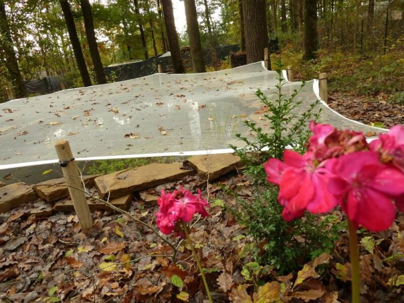 Protéger un bassin sous des arbres avec un filet anti-feuilles