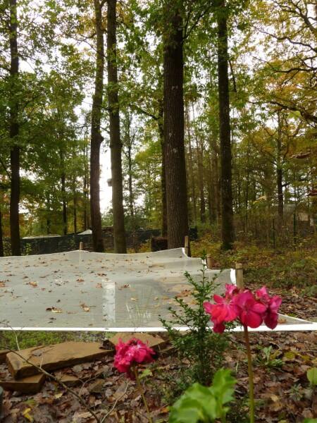 Chute des feuilles sur un filet anti-feuilles pour bassin