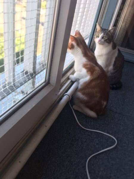 Filet de protection pour chats pour sécuriser une fenêtre / porte-fenêtre