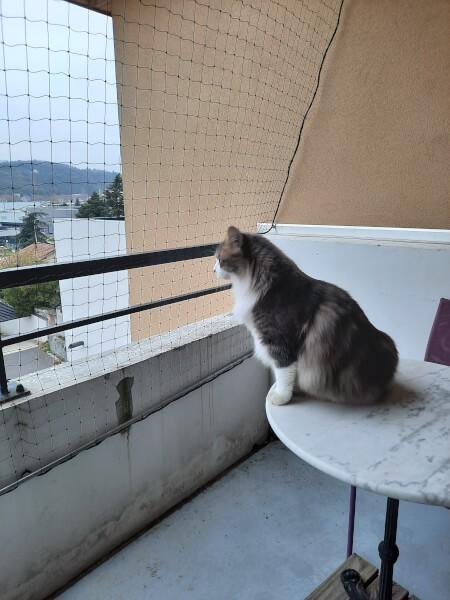 Filet de protection pour chat économique pour sécuriser un balcon