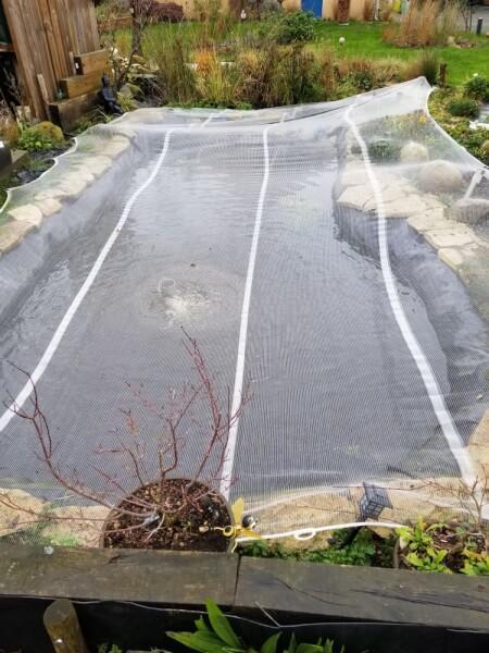 Filet anti-feuilles pour protéger un bassin à carpes Koï