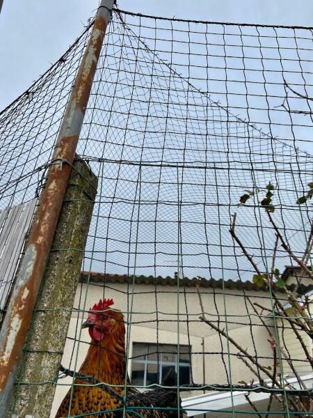 Filet de volière pour surélever le grillage en prévention de la grippe aviaire
