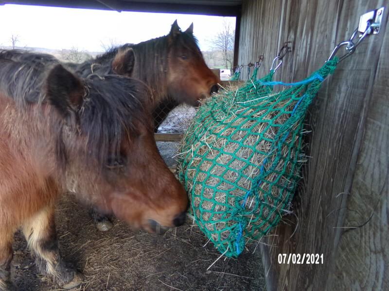 ch/èvres vieux Pour poneys 1 x noir et rouge Mailles adapt/ées aux esp/èces Sac /à foin pour les d/éplacements Filet /à foin extra large pour chevaux 5 x 5 cm chevaux Meilleure digestion