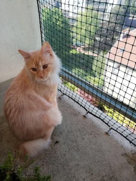 Filet de protection robuste pour chats pour balcon