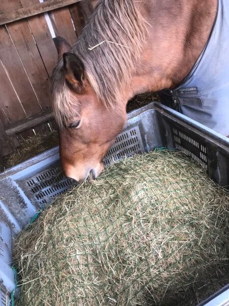 Filet pour mangeoire à chevaux slow feeding