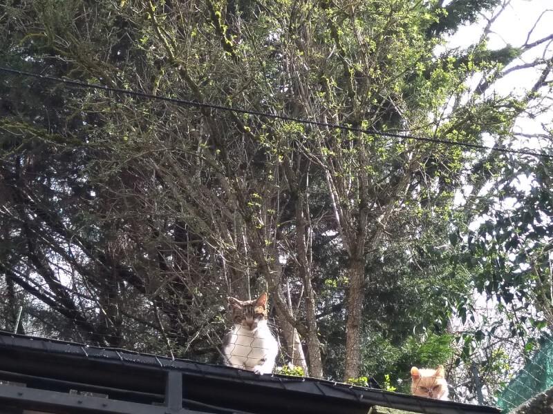 Filet installé afin d'empêcher les chats de descendre dans ma cour