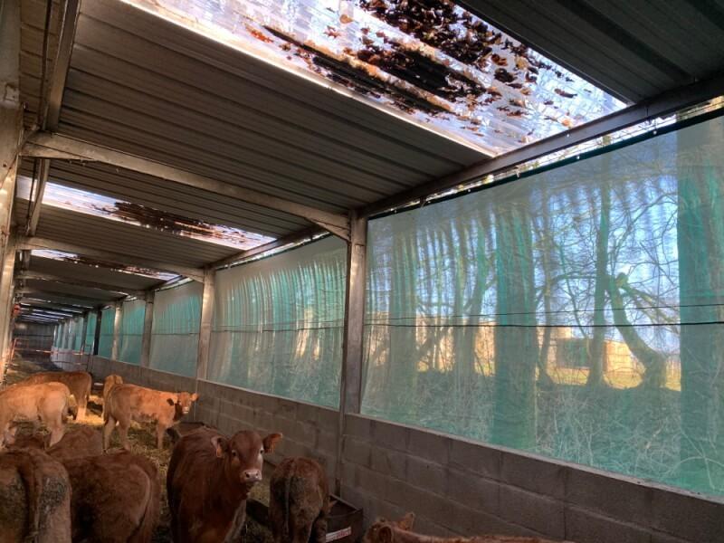Filet brise-vent pour améliorer le confort des vaches