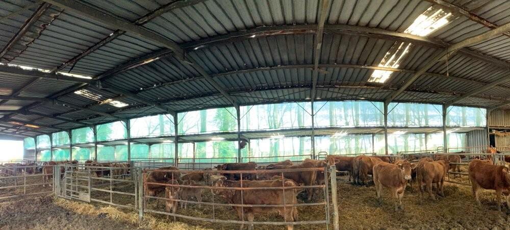 Filet brise-vent pour confort des animaux sous bâtiment agricole