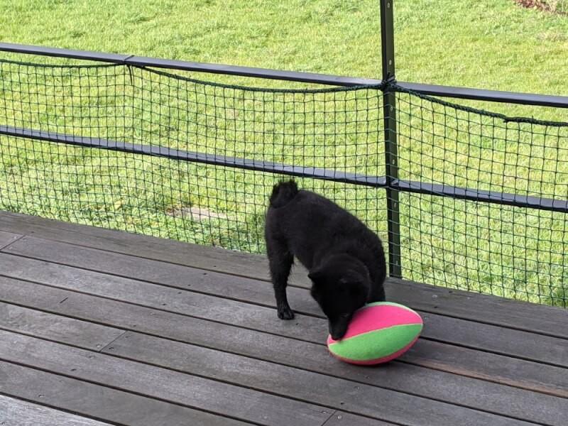 Filet de protection balcon pour chien