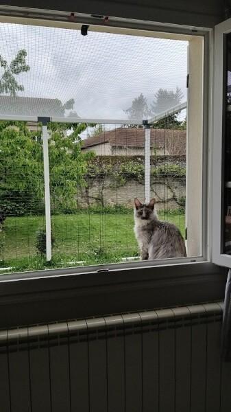 Filet de protection pour chats - mailles 25 x 25 mm - ∅ 1,8 mm envoyé par un client