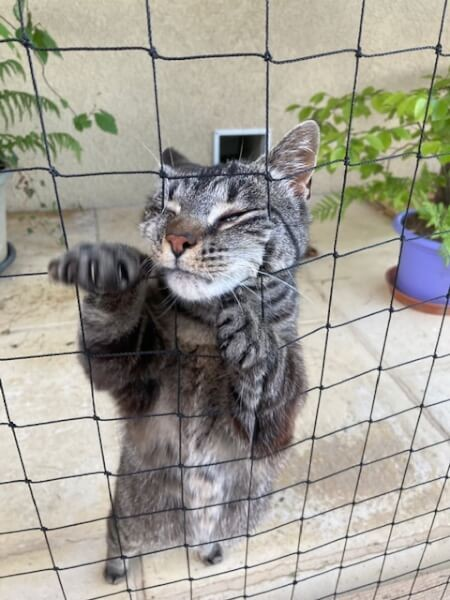 Filet de protection pour chat économique