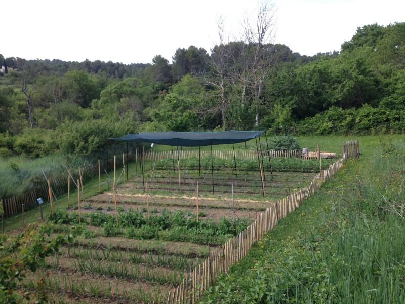 Voile d'ombrage installé dans un jardin potager