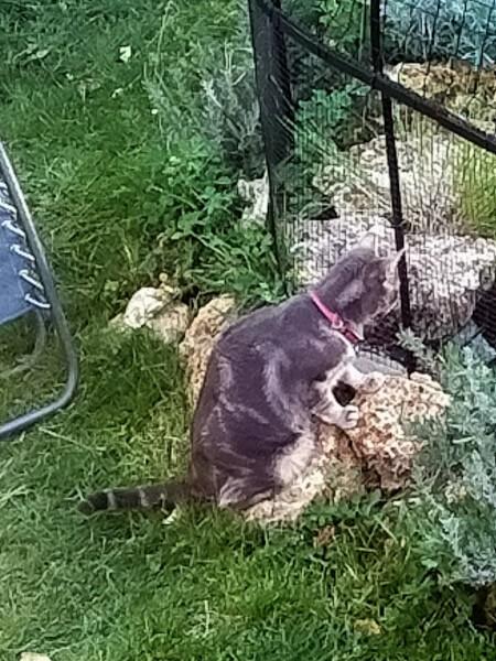 Filet pour protéger les poissons des chats
