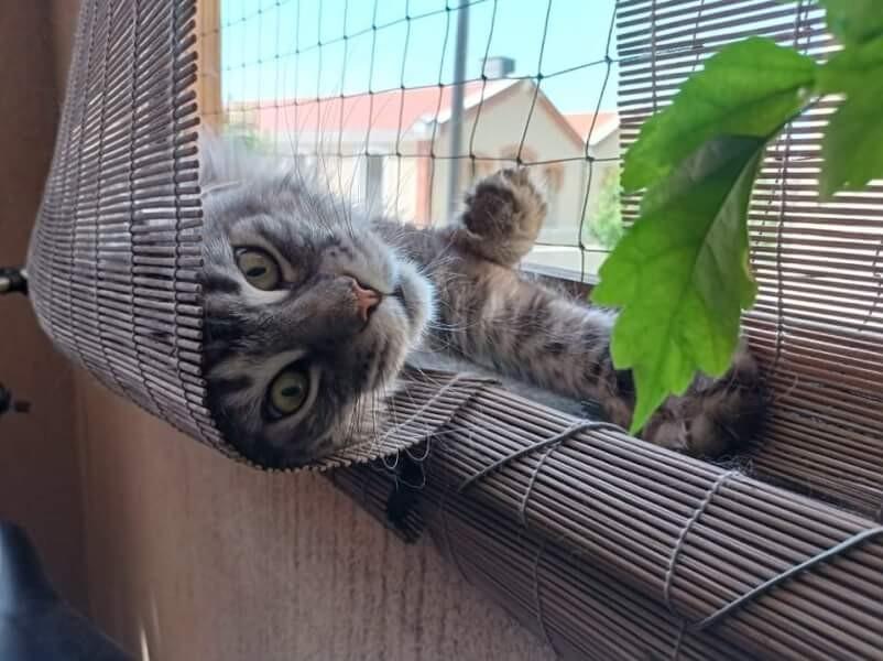 Filet de protection pour sécuriser les siestes du chat
