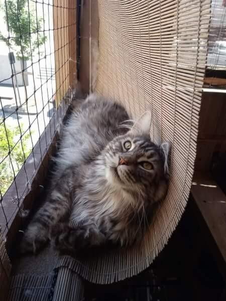 Fini les chutes dans le jardin des voisins grâce au filet de protection pour chat
