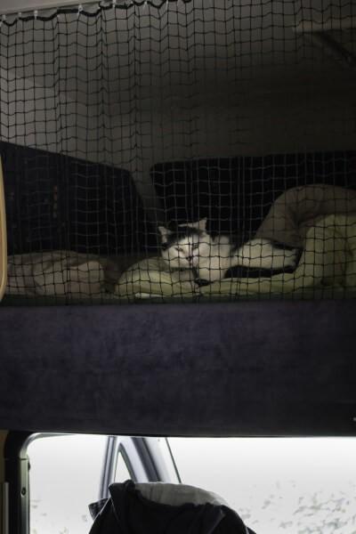 Filet de protection pour chats pour capucine camping car