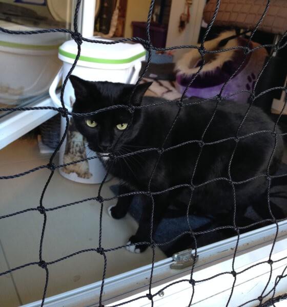 Filet de protection pour chats - Mailles 25 x 25 mm envoyé par un client