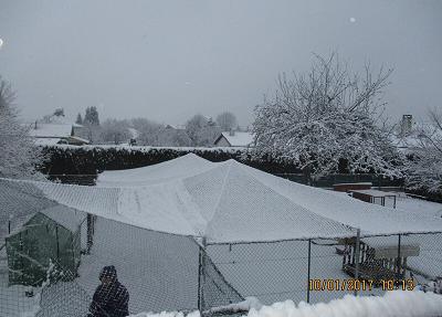 Filet volière neige