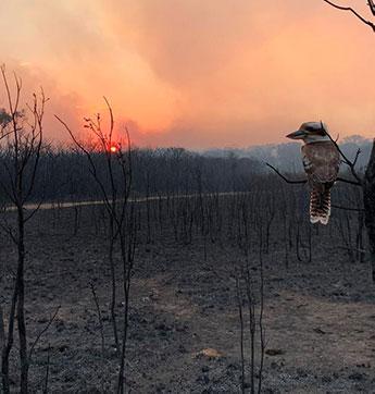un martin pécheur sur une branche d'arbre brulé